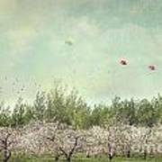 Orchard Of Apple Blossoming Tees Poster by Sandra Cunningham
