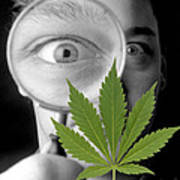 Cannabis Research Poster by Victor De Schwanberg