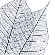 Skeleton Leaves Poster by Elena Elisseeva