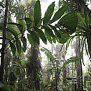 Bromeliad Bromeliaceae And Tree Fern Poster by Cyril Ruoso