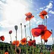 Field Of Poppies. Poster by Bernard Jaubert