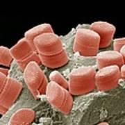 Diatoms, Sem Poster by Steve Gschmeissner