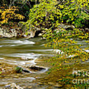 Fall Along Williams River Poster by Thomas R Fletcher