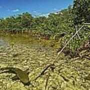 A Lemon Shark Pup Swims Among Mangrove Poster by Brian J. Skerry