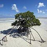 A Lone Mangrove Tree On A Sand Spit Poster by Scott S. Warren