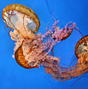 A Trio Of Jellyfish Poster by Kristin Elmquist