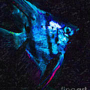 Angelfish Poster by Wingsdomain Art and Photography
