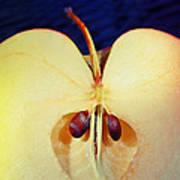 Apple Poster by Skip Hunt