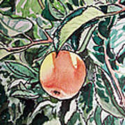 Apple Tree Sketchbook Project Down My Street Poster by Irina Sztukowski