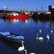 Ardglass, Co Down, Ireland Swans Near Poster by The Irish Image Collection