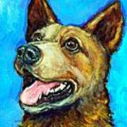 Australian Cattle Dog   Red Heeler  On Blue Poster by Dottie Dracos