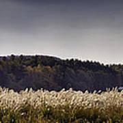 Autumn Grasses - North Carolina Autumn Scene Poster by Rob Travis