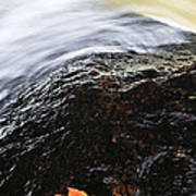 Autumn Leaf On River Rock Poster by Elena Elisseeva