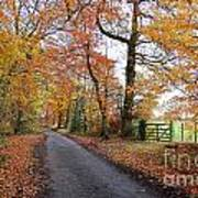 Autumn Leaves Poster by Harold Nuttall