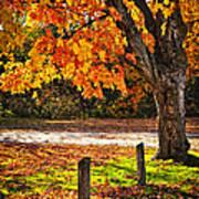 Autumn Maple Tree Near Road Poster by Elena Elisseeva