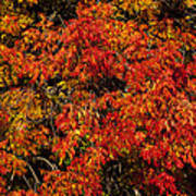 Autumn Red Poster by Garry Gay