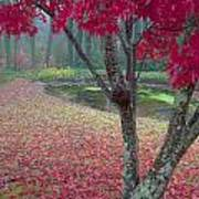 Autumn Red Poster by Rob Travis