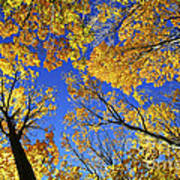 Autumn Treetops Poster by Elena Elisseeva