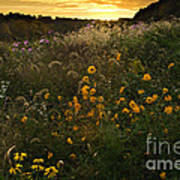 Autumn Wildflower Sunset - D007757 Poster by Daniel Dempster