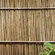 Bamboo Fence Poster by Don Mason