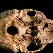 Base Of Skull 5, Sima De Los Huesos Poster by Javier Truebamsf