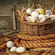 Basket Of Eggs On Straw Poster by Sandra Cunningham