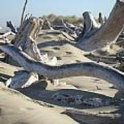 Beach Driftwood Art Prints Coastal Sand Dunes Shore Poster by Baslee Troutman