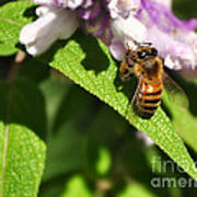 Bee At Work Poster by Kaye Menner