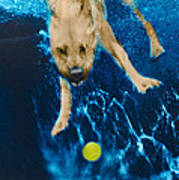 Belly Flop Poster by Jill Reger