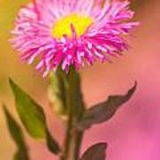 Little Flower Poster by Angela Doelling AD DESIGN Photo and PhotoArt