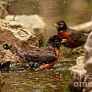 Birds Of A Feather Swim Together Poster by Inspired Nature Photography Fine Art Photography