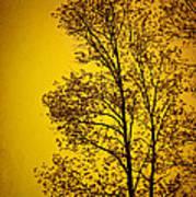 Blazing Sunset Poster by Cheryl Davis