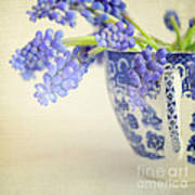 Blue Muscari Flowers In Blue And White China Cup Poster by Lyn Randle
