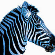 Blue Zebra Art Poster by Rebecca Margraf