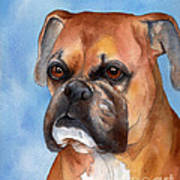 Boxer Poster by Cherilynn Wood