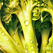 Broccoli Scape I Poster by Nancy Mueller
