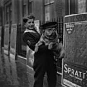 Bulldog Beauty Poster by London Express