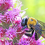 Busy As A Bee Poster by Becky Lodes