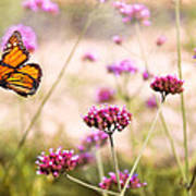 Butterfly - Monarach - The Sweet Life Poster by Mike Savad