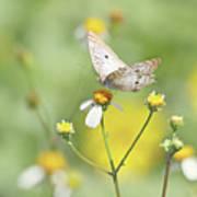 Butterfly On Wildflower Poster by Kim Hojnacki