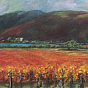 Calistoga Vineyard In Napa Valley By Deirdre Shibano Poster by Deirdre Shibano