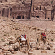 Camels In Front Of The Royal Tombs Petra Poster by Martin Child