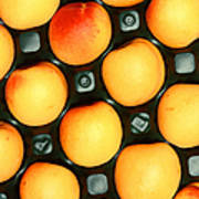 Castlebrite Apricot Poster by Photo Researchers