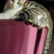 Cat On Sofa Poster by Sami Sarkis
