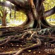 Centenarian Tree Poster by Carlos Caetano