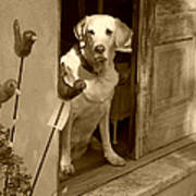 Charleston Shop Dog In Sepia Poster by Suzanne Gaff