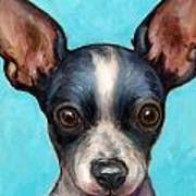 Chihuahua Puppy With Big Ears Poster by Dottie Dracos