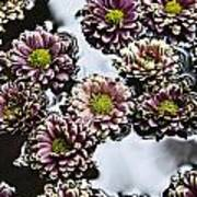 Chrysanthemum 3 Poster by Skip Nall