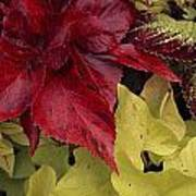 Coleus And Other Plants In A Window Box Poster by Paul Damien