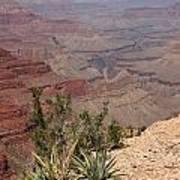 Colorado River Grand Canyon National Park Arizona Usa Poster by Audrey Campion